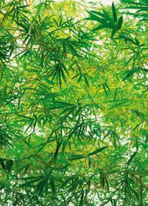 Bamboo 00372