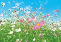Flower Meadow 00281