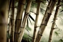 Бамбук 6022
